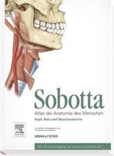 Kopf, Hals und Neuroanatomie