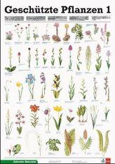 Geschützte Pflanzen. Tl.1