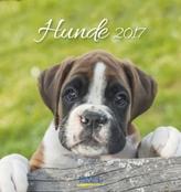 Hunde 2017