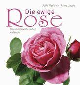 Die ewige Rose