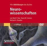Neurowissenschaften, 1 DVD-ROM