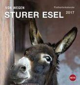 Esel Postkartenkalender 2017