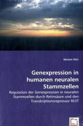 Genexpression in humanen neuralen Stammzellen