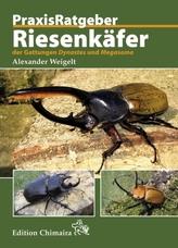 Riesenkäfer der Gattungen Dynastes und Megasoma