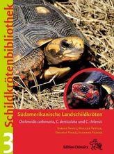 Südamerikanische Landschildkröten