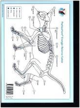 Akupunktur-Tafel Katze