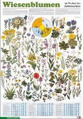 Wiesenblumen im Wechsel der Jahreszeiten
