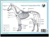 Akupunktur-Tafel Pferd