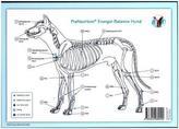 Akupunktur-Tafel Hund