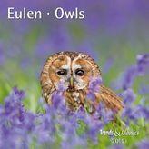 Eulen / Owls 2019