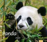 Panda 2019