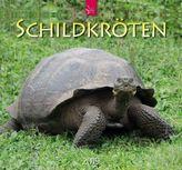 Schildkröten 2019