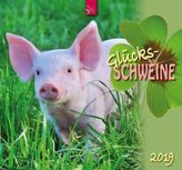Glücksschweine 2019
