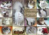 Katzen Geburtstagskalender