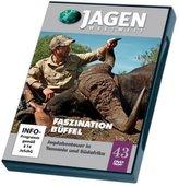 Faszination Büffel, 1 DVD-Video