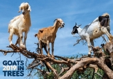 Goats in Trees 2019